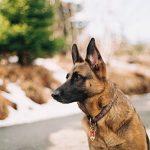 Family Protection Dog start op donderdag 8 maart om 19:30 uur