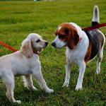 Uitlaten van je hond - Alles wat je moet weten