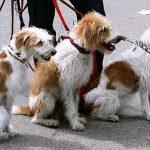 Wat zijn de beste halsband en riem voor je hond?